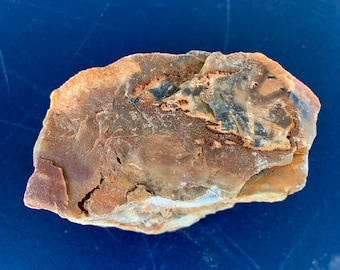 Beautiful Petrified wood from Southern Desert. Fossilized wood. Crystallized wood. Free Shipping
