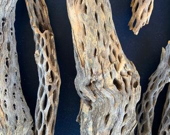 4 Large Raw Natural Cholla Cactus Skeleton Wood from around Joshua Tree California. Free Shipping
