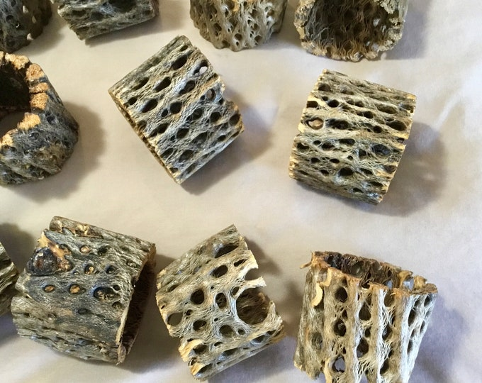 10 Handmade Cholla skeleton napkin rings, one of a kind dinner ware cholla wood napkin ring. Free shipping
