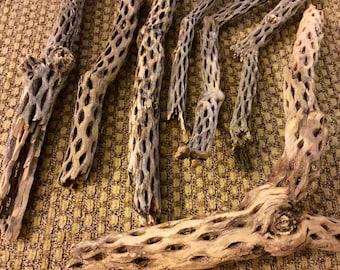 Raw natural cholla cactus wood, cholla skeleton from around Joshua Tree California
