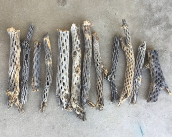 Raw natural cholla cactus wood, cholla skeleton from around Joshua Tree California.  Whole sale lot 10-12 pieces Free Shipping