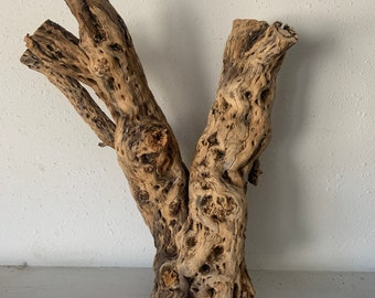 Extra large Raw cholla wood 16 inches Large Raw Natural Cholla Cactus Skeleton Wood 16 by 13 inch reptile and fish aquariums Free Shipping