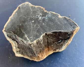 Beautiful Petrified wood from Southern Desert. Fossilized wood. Free Shipping