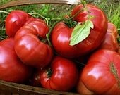 Pink Tomato SUDDUTH 39 S STRAIN BRANDYWINE 15 Heirloom Vegetable Seeds