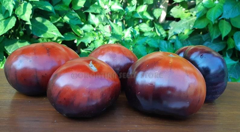 Blue Tomato At