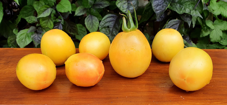 20 Tomato Seeds KANGAROO/'S HEART Heirloom Vegetable Organic-Rare Red Oxheart