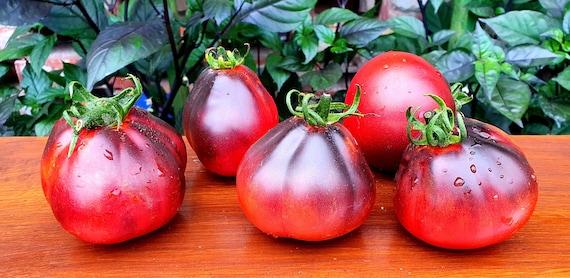 RARE Tomato Black Pear 15 seeds UK SELLER