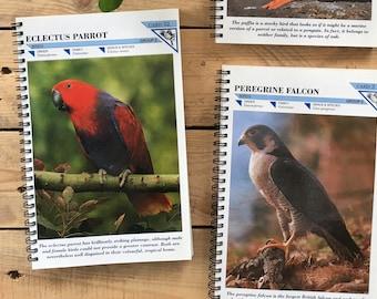 Animals 90s Fact-file Notebook - wildlife - Environment- Endangered species Etc