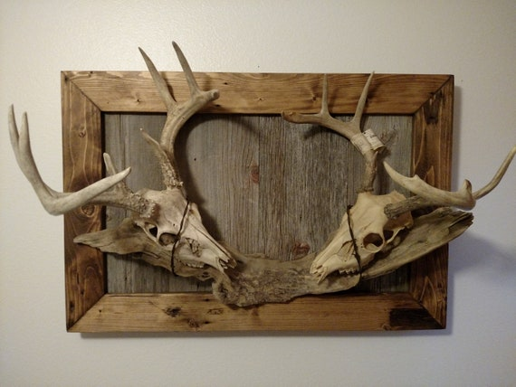 Table Pedestal Plaque Rustic Barnwood European Deer Skull Mount Wall