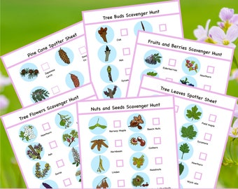Trees - Printable nature walk scavenger hunt activities and checklist