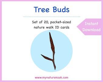 Tree Buds - Printable PDF nature walk cards for kids