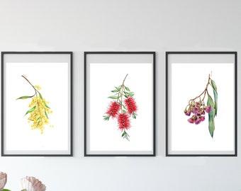 Australian native flower drawing print set v2. Bottlebrush, Wattle & Gum Blossoms. Watercolour pencil art. Unique gift for her, Aussie decor