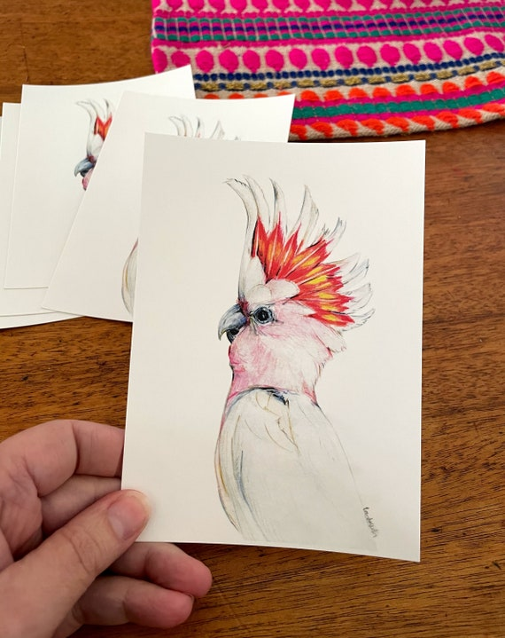 Australian Birds Standard Postcard