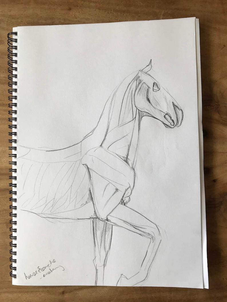 Horse Anatomy Hand Drawn Black White Drawing Artwork Etsy