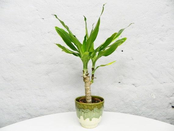 60s Blue-tip/vintage Plant pot/Ceramic pot/60s Pot Ceramic green
