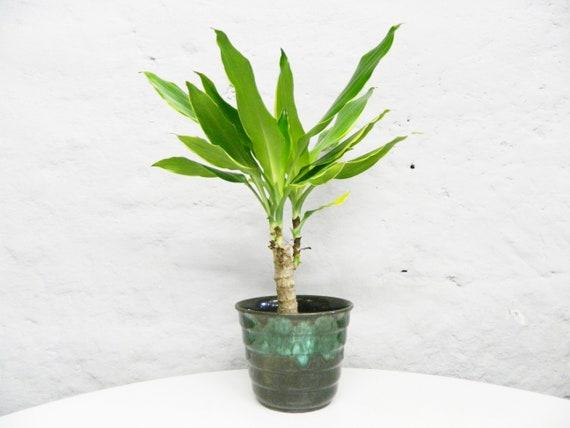 60s Plant Pot/Vintage Plant Four/Flower Pot Ceramic/Flower Pot Green
