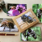 """Gift Box of 5 Blank Greeting Cards 6""""x4"""" - Bees from Western Australia"""