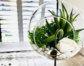 DIY terrarium air plant kit, glass with a stand. Gift