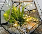 DIY Geometric Pentagon Glass Terrarium, Air Plant. Bronze. DIY terrarium. Gift, Gardner gift, office gift.