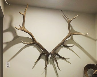 Invisible Elk Shed Wall Mount