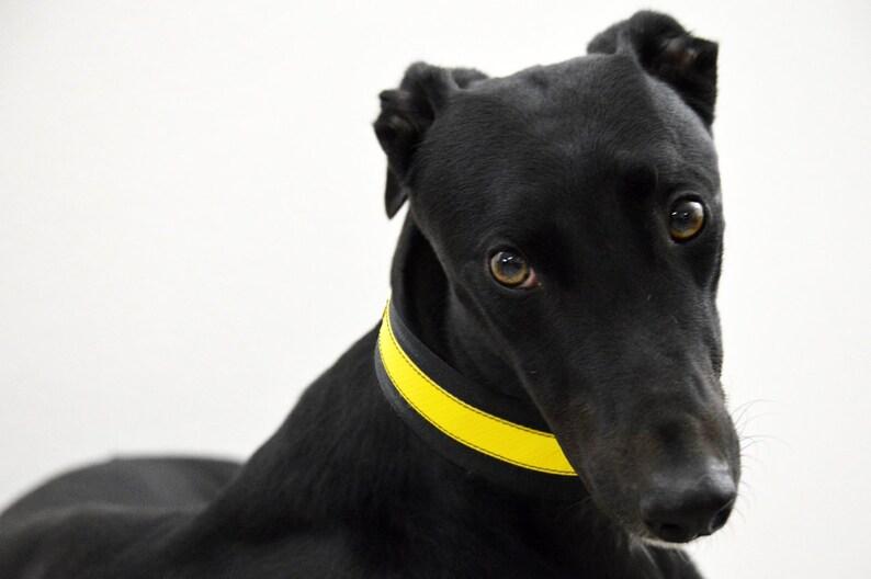 Yellow collar/Greyhound collars/whippet/Greyhound/Dog image 0