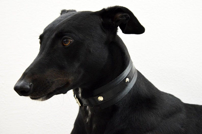 Black collar with studs/greyhound image 0