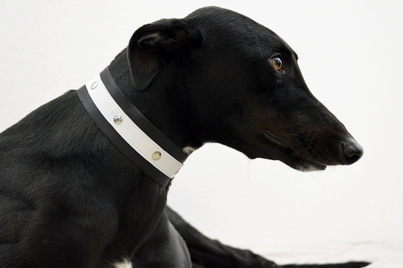 White studded collar/greyhound collars/whippet/Greyhound/dog image 0