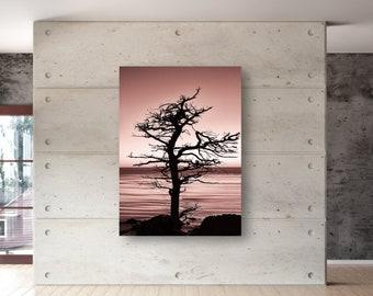 Lone Cypress Tree Photography Artwork Wall Art One Panel HD Metal Print Wall Art , Ready to Hang, Pebble Beach - Monterey,CA