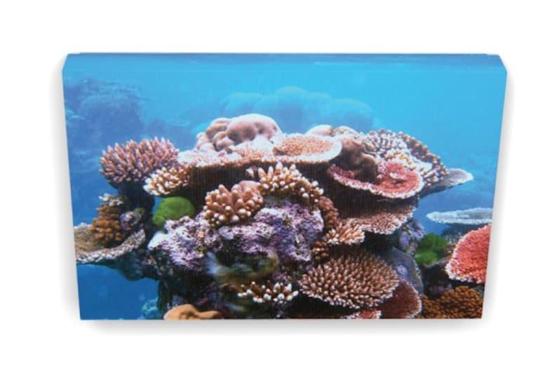 506c426f0ffa Acropora Coral Bunch Coral Reef Art Canvas Print 8