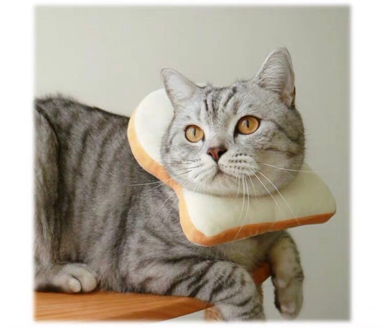 Toast costume for small pet bunny rabbit hat for small pets image 0