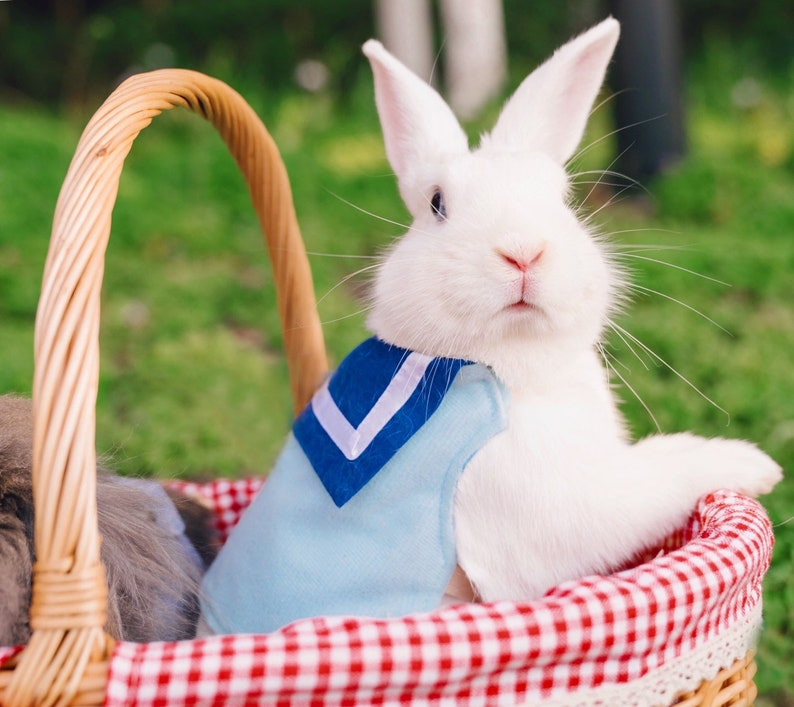 Harness shirt for pet bunny small pet harness dress for pet image 0