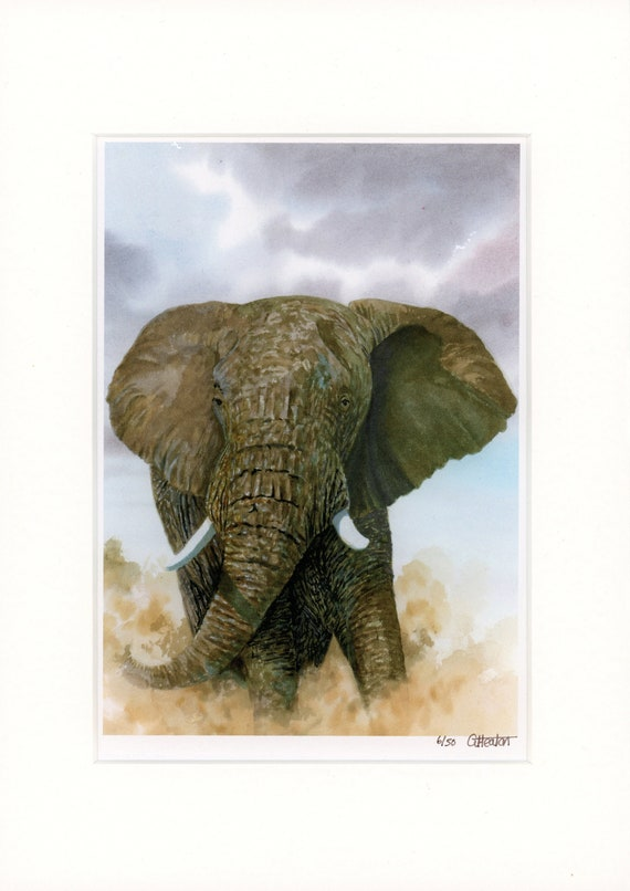 Limited Edition elephant print Mounted to fit A4 frame Only 50 available worldwide from an original watercolour painting, wildlife art UK
