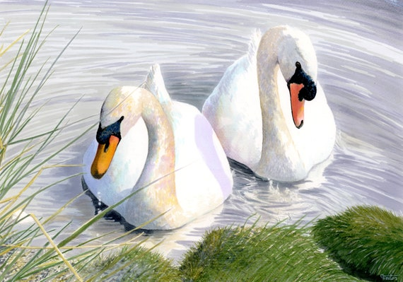 A3 size original watercolour painting, 'Swan Lake',  wildlife bird art direct from the artist in the UK, Mute Swans artwork