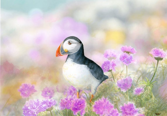 A3 size original watercolour painting, 'Puffin in the Sea Thrift',  wildlife bird art direct from the artist, Puffins and coastal flowers