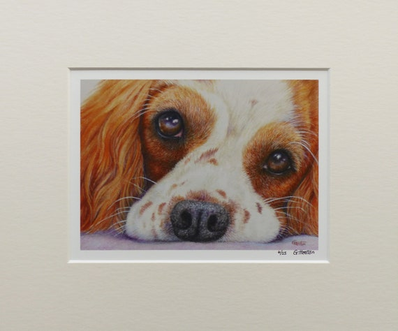 Cavalier King Charles Spaniel, very limited edition fine art print, only 25 worldwide from an original coloured pencil drawing by G. Heaton