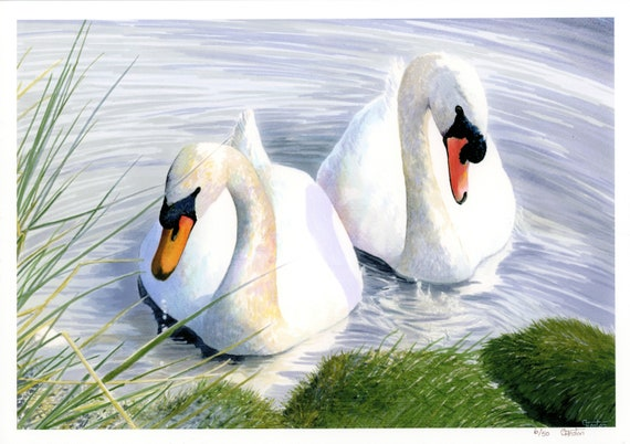 Very limited edition 'Swan Lake' A4 print from an original watercolour painting.  British wildlife bird paintings and prints, direct from UK
