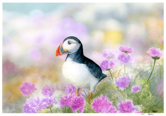 Very limited edition 'Puffin in the Sea Thrift' A4 print from an original watercolour painting.  Wildlife bird and flower painting prints