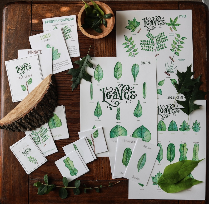 Leaves Full Nature Guide Leaf Art Posters and Card Sets image 0