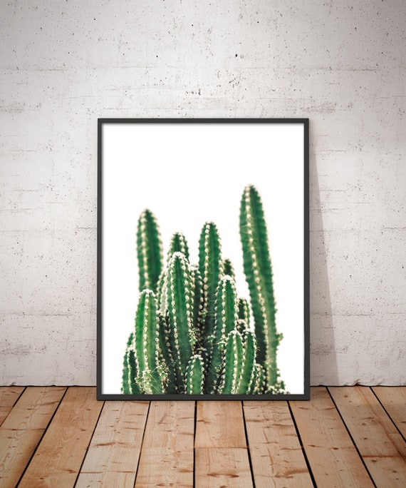 Cacti /& Succulents Kitchen Vintage Art Print Poster A1 A2 A3 A4 A5