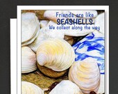 Seashell Box of 8 Cards \ Friends are like Seashells \ The Nautilus \ All you need is Love and Seashells \ Take Me Away \  A7 Cards