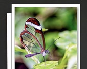 Butterfly Box of 8 Cards \ GlassWing Butterfly \ LaceWing Butterfly \ Monarch Butterfly \ Rice Paper Butterfly \ A7 Cards