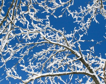 Fine Art Photography, Snow-covered Branches Against Blue Skies, Minnesota photography, Digital Prints, Downloadable Wall Art, Digital photos
