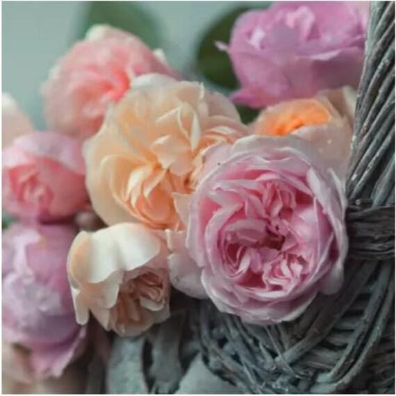 Serviette English Rose