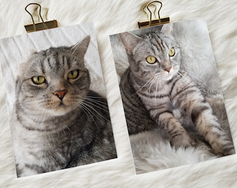 Tickets for cat fans: One-eared cat and hygge cat   Cats postcard as greeting to cat lovers!