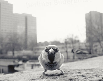 """Photography """"Berliner Spatz"""", fine art print, black and white with sepia effect, 20 x 20 cm"""