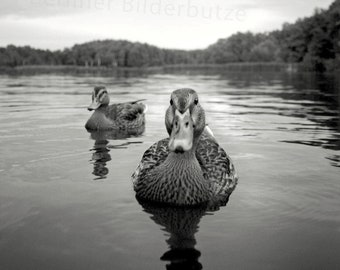 """Photography """"On the Lake"""", fine art print, black and white with sepia effect, 20 x 20 cm, photo gift"""