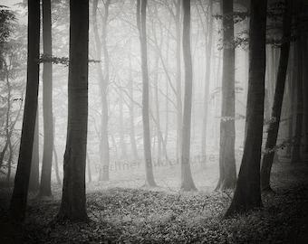 "Photography ""Im Buchenwald"", island of Rügen, fine art print, black and white with sepia effect, 20 x 20 cm"