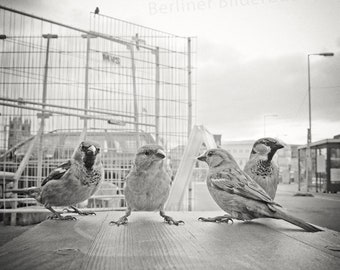 """Photography """"Sparrow gang"""", high quality photo print, Berlin center, black and white, sepia, 20 x 20 cm, photo gift"""