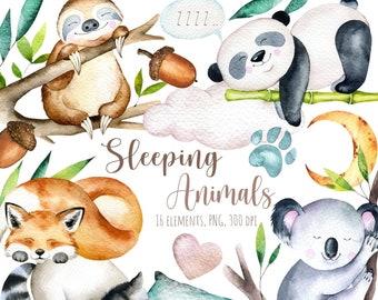 Cute sleeping animals watercolor clipart, Cute sleeping panda, sweet dreams clipart, good night clipart, Cute sleeping Sloth, Cute  Raccoon