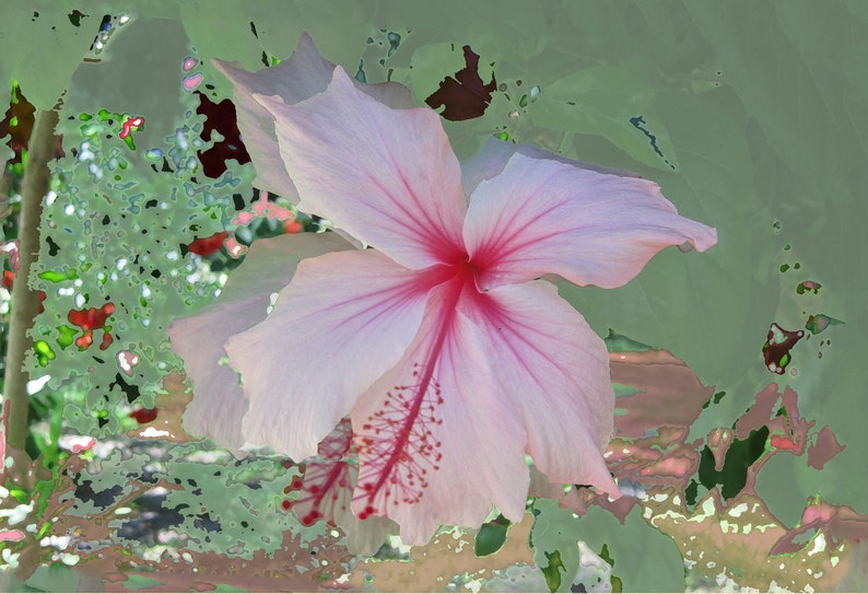 Wall Art Tropical Weeping Hibiscus Original Design Heavy Etsy